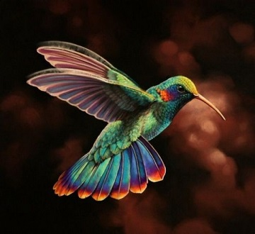 The Google Hummingbird Update